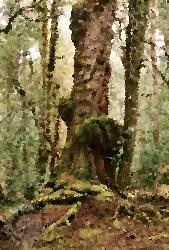 hutan-beringin-jerami